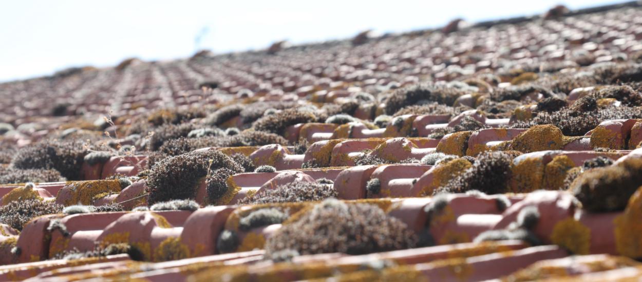 démoussage toit roanne