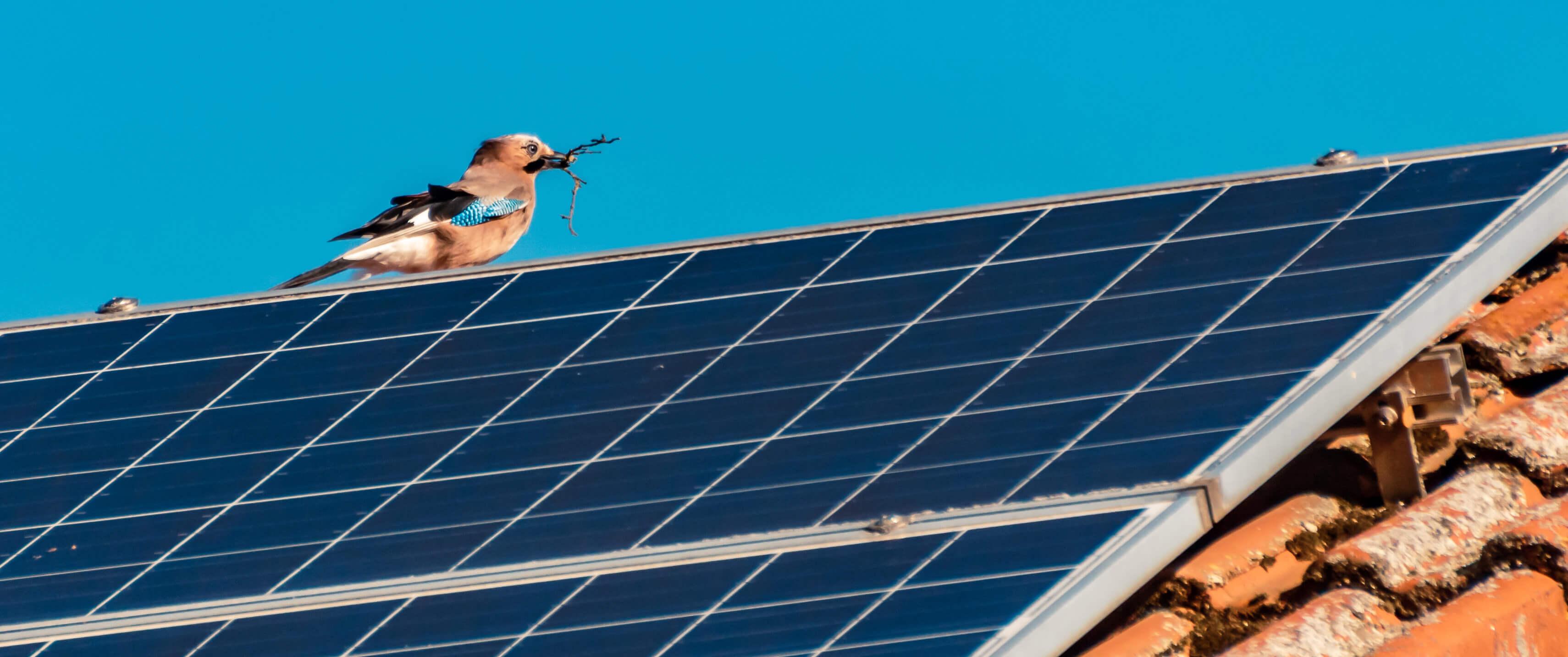 installation panneaux solaires roanne